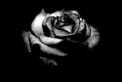 image شعر زیبای شاعر عاشق دلفسرده ام و زندگینامه شاعر فریدون توللی