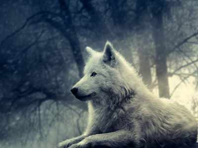 image شعر زیبای گفت دانایی که گرگی خیره سر شاعر فریدون مشیری