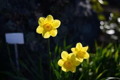 image شعر زیبای رنگ از گل رخسار تو گیرد گل خود روی شاعر باباافضل کاشانی