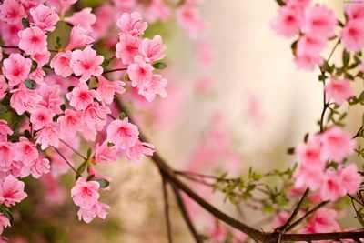image شعر زیبای شکوفه های هلو و زندگینامه شاعر حسین منزوی