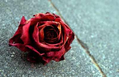 image, شعر زیبای گل خشکیده شاعر فریدون مشیری