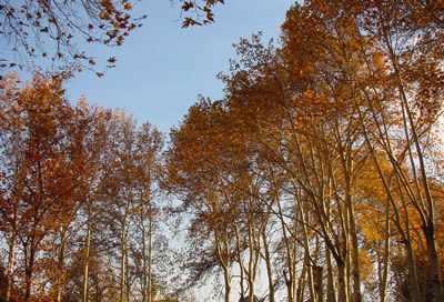 image, شعر زیبای خراب از باد پائیز خمارانگیز تهرانم شاعر شهریار
