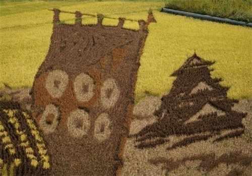 image, تصاویر زیبای هنری در مزرعههای برنج ژاپن