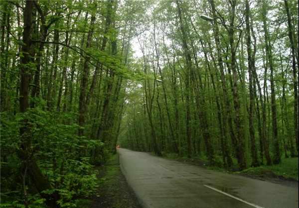 image, عکس ها و توضیحات جالب از پارک جنگلی گیسوم