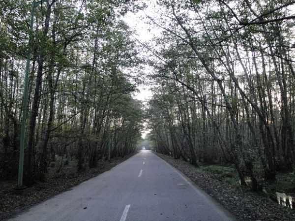 image عکس ها و توضیحات جالب از پارک جنگلی گیسوم