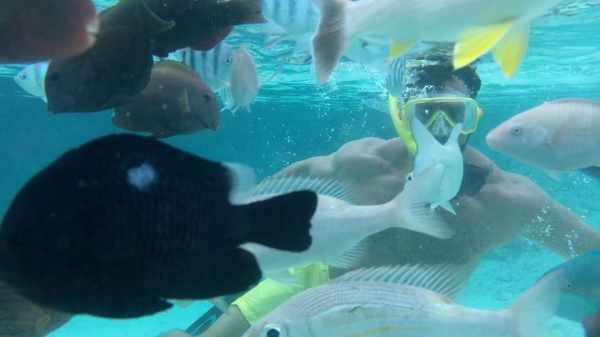 image اثرات مفید ورزش شنا برای هر قسمت از بدن