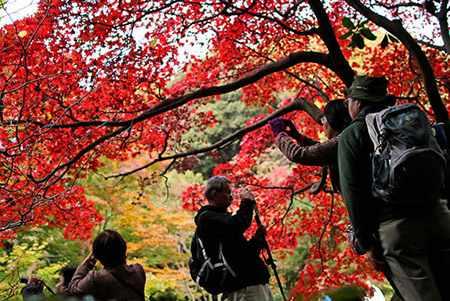 image عکسی زیبا از طبیعت پاییز پارکی در یوکوهاما ژاپن