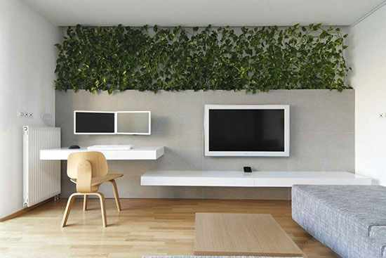 image چطور فضای منزل خود را با استفاده از گیاهان دکور کنیم