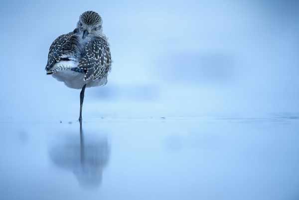 image عکسی زیبا از پرنده سلیم خاکستری سواحل شمال اسپانیا