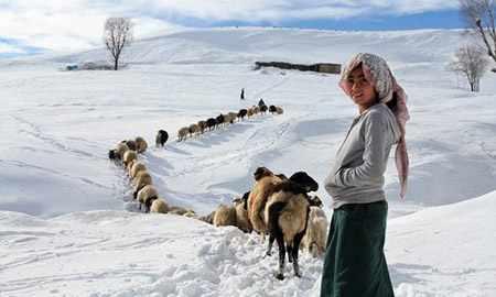 image عکس دختر چوپان در برف منطقه جنوب شرق ترکیه