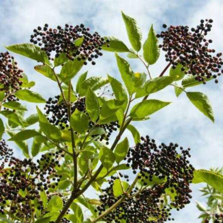 image ریشه و هسته کدام میوه ها برای خوردن خطرناک است
