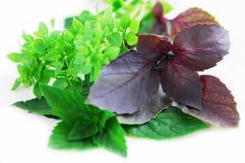 image, آموزش کاشت سبزی خوردن در آپارتمان برای مصرف روزانه