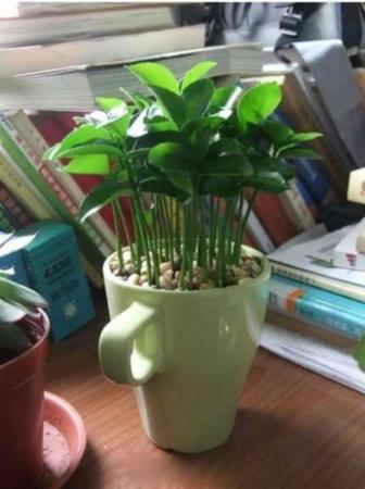 image آموزش تصویری کاشت درخت لیمو در خانه و نحوه نگهداری آن