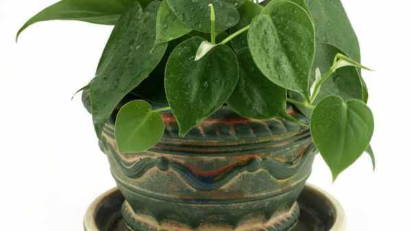 image آیا نگهداری از گل و گیاه در آپارتمان روحیه ما را بهتر میکند