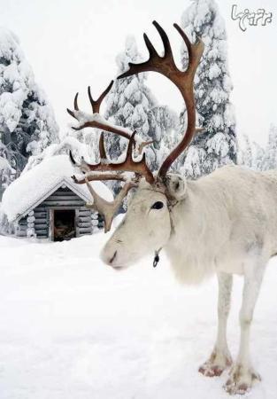 image, زیباترین سرزمین جهان در زمان کریسمس
