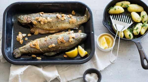 image خواص ماهی قزل آلا برای سلامتی