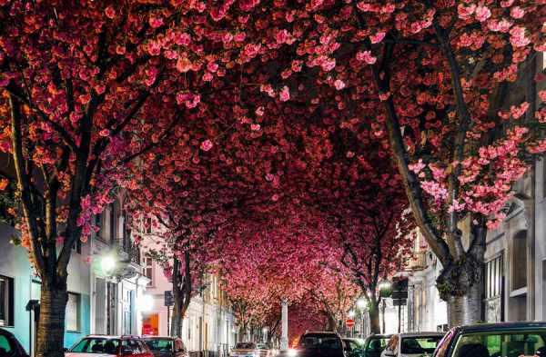 image تصاویر دیدنی از خیابان هایی پر از گل های رنگارنگ در جهان