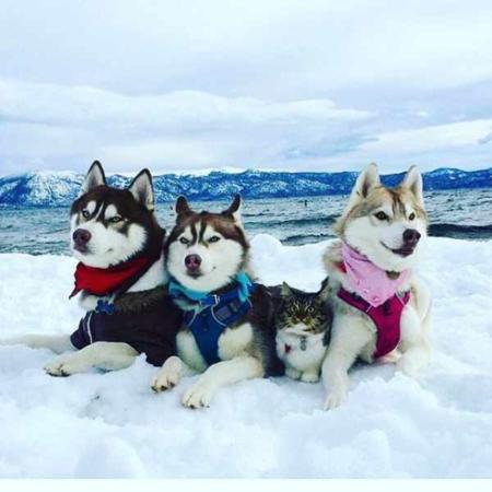 image عکس بامزه و دیدنی یک گربه با سگ ها