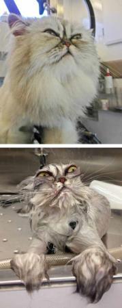 image عکس های فوق العاده دیدنی و بامزه از حیوانات خیس شده
