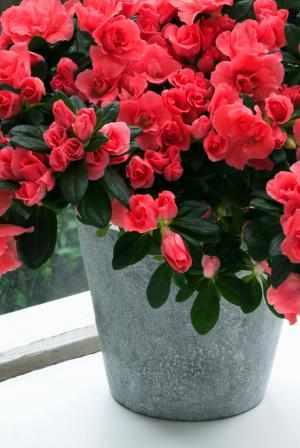 image, چه نوع گیاهی برای چیدمان سرویس بهداشتی مناسب است