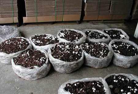 image آموزش جالبی برای کاشت قارچ خوراکی در خانه