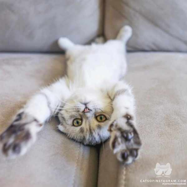 image عکس بامزه بچه گربه روی مبل