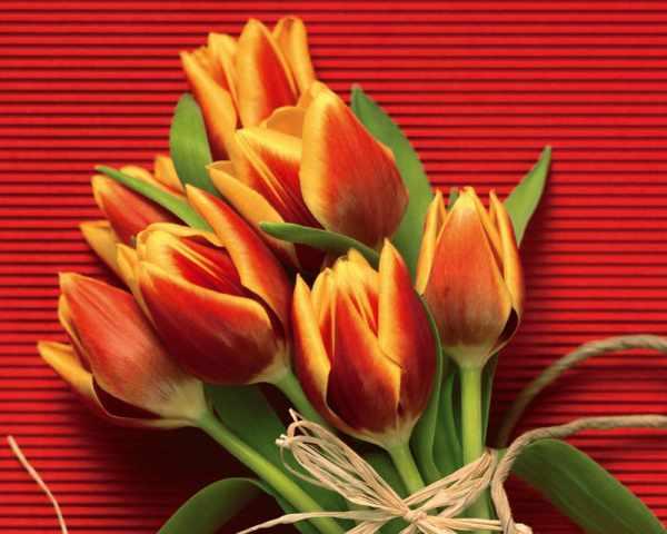 image تصاویر گل های زیبا برای عکس پروفایل اینستاگرام و تلگرام