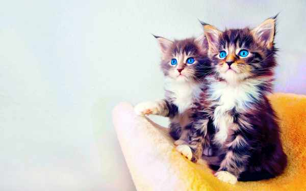 image عکس گربه های بامزه برای پروفایل تلگرام