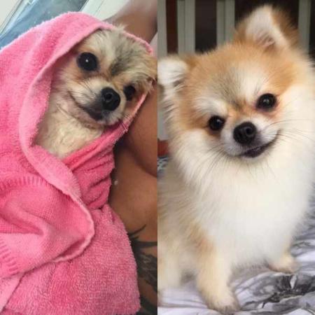 image عکس یک سگ بامزه بعد از حمام
