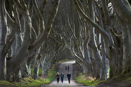 image عکسی دیدنی ازجاده ای زیبا و پر درخت در ایرلند شمالی