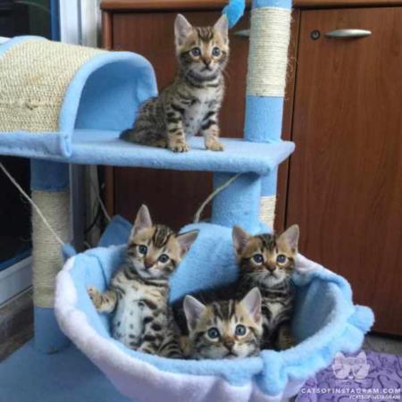 image عکس دیدنی از بچه های گربه های ناز و دوست داشتنی