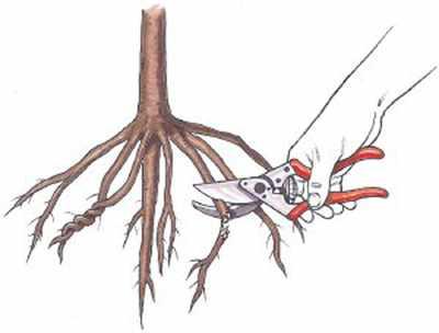 image راهنمای کامل برای کسانی که قصد کاشت نهال دارند
