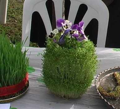 image آموزش درست کردن و کاشت سبزه به مدل های سنتی