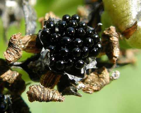 image آشنایی با گیاه ونوس مگس خوار و نحوه کاشت و نگهداری آن