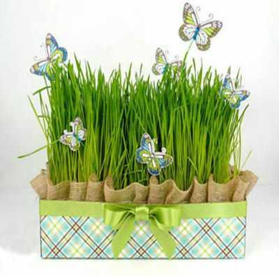 عکس, بهترین زمان برای کاشت دانه ها برای سبزه سبز کردن