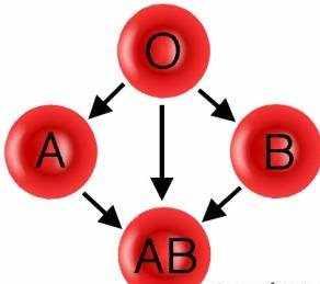 image گروه خونی  O گروه خونی در آدم های موفق است