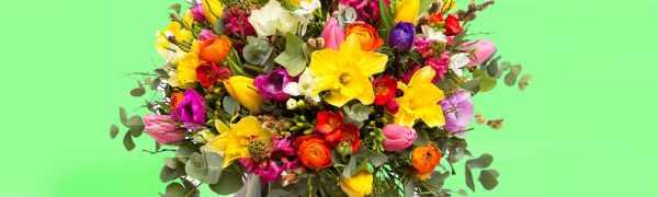 image, چه رنگ گل برای هدیه دادن به چه کسی مناسب است