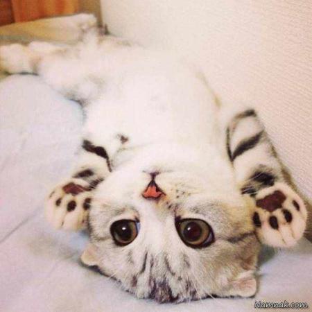 image عکس های دیدنی از گربه معروف اینستاگرامی