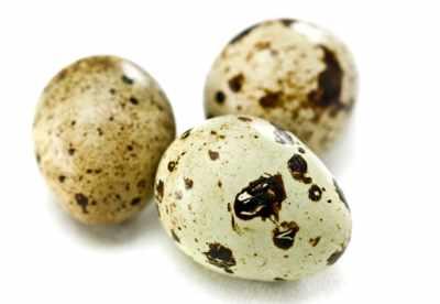 image, آیا کودکان می توانند تخم بلدرچین بخورند