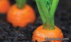 image, سبزیجاتی که می توانید در آشپزخانه بکارید و نحوه کاشت آن