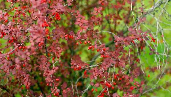 image, چه نوع گل و گیاه تزیینی رشد سریعی دارد