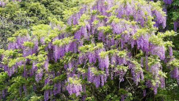 image چه نوع گل و گیاه تزیینی رشد سریعی دارد