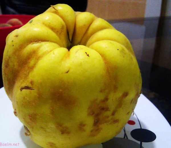 image میوه به چه خواصی دارد و اثرات آن بر روی زیبای و پوست و مو