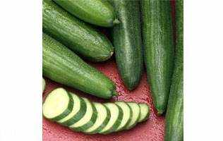 image خیار کاشته شده در گلخانه با خیار جالیز چه فرقی دارد