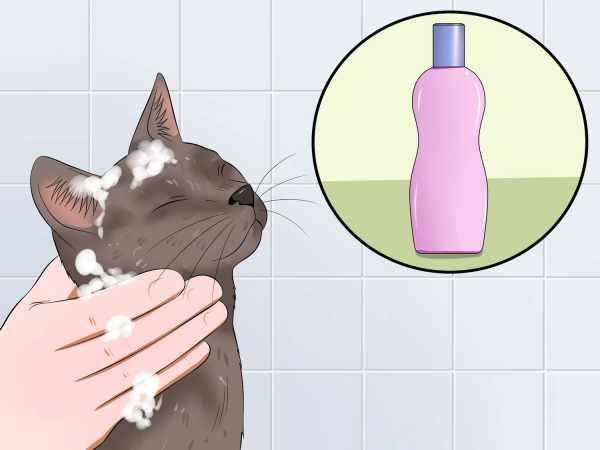 image چطور باید گربه خانگی خود را حمام کنید