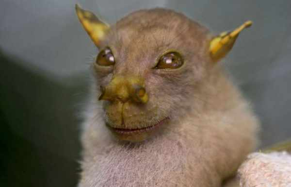 image عکس های دیدنی از حیوانات عجیب و غریب