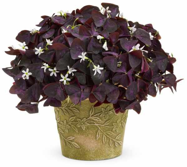image معرفی گیاهان آپارتمانی که در تمام فصل ها گل می دهند