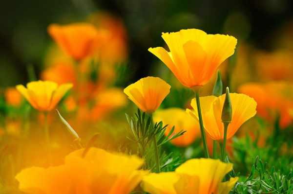 image, عکس های زیبا از دوست داشتن برای پروفایل تلگرام با گل های رز
