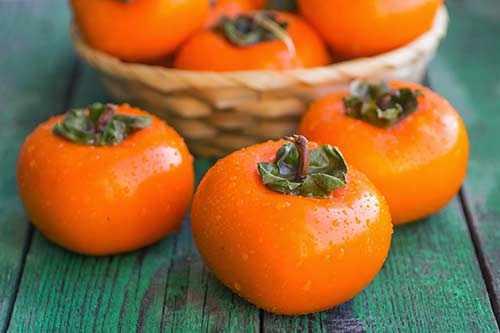 image, خرمالو میوه ای مفید برای تقویت سیستم ایمنی بدن