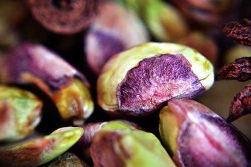 image خوردن پسته خام درمانی مفید برای رهایی از یبوست